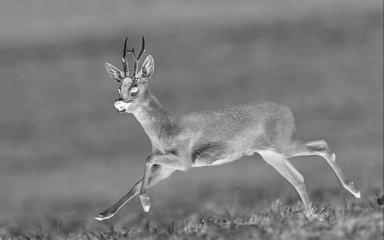 http://waffen-mario.de/egun/mario/1860/Batt/deer-in-thermal-image.jpg